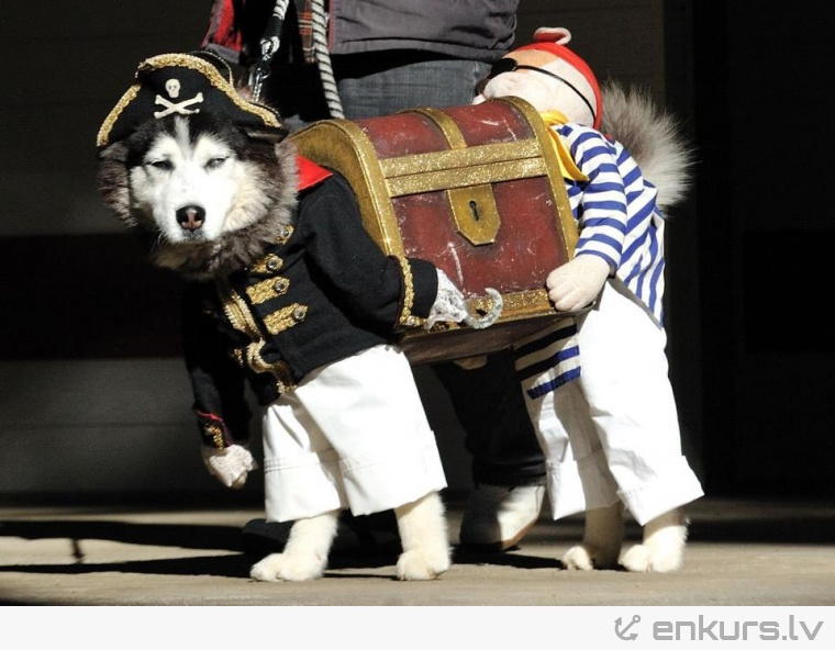 Pirātu tērps sunim
