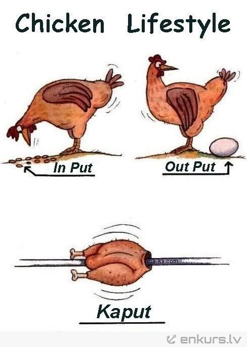 Chicken lifestyle! Nevarēju neielikt! :)