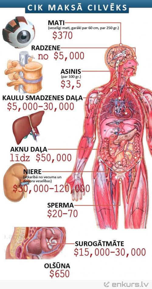 Cilvēka orgānu cenas