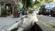 Kaķis čillo