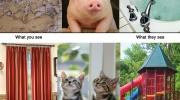 Ko redz dzīvnieki