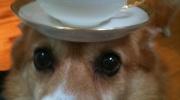 Lietas uz suņa galvas