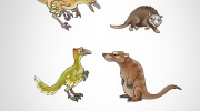 Mednieka un medījuma evolūcija