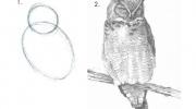 Pamācība, kā zīmēt pūci