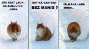 Par kāda kaķa dzīvi.. ;(