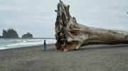 Pludmalē izskalots koka gabals