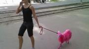 Rozā kaza, jo suņi ir pārāk izplatīti mājdzīvnieki