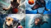 Suņi zem ūdens
