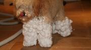 Suns Sniegabiksis